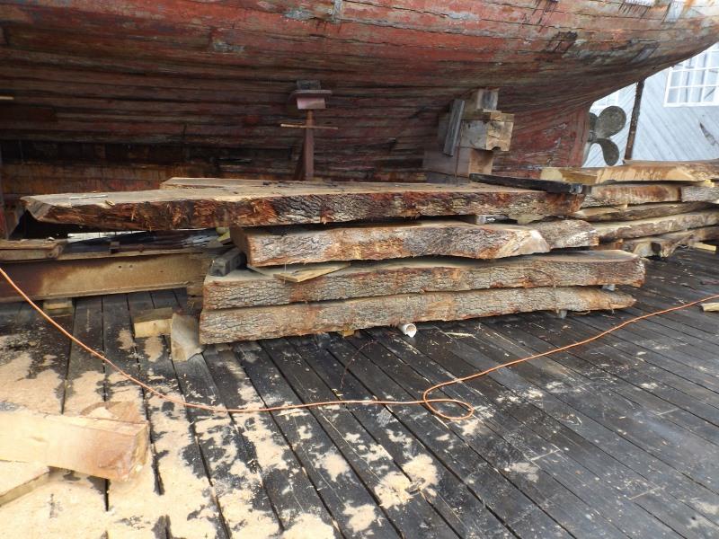 Live oak slabs waiting to be shaped